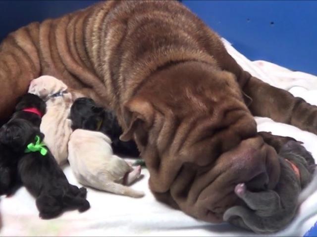 Qual raça de cachorro mais se parece com a sua personalidade?