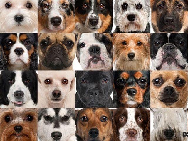 Qual raça de cão representa você?