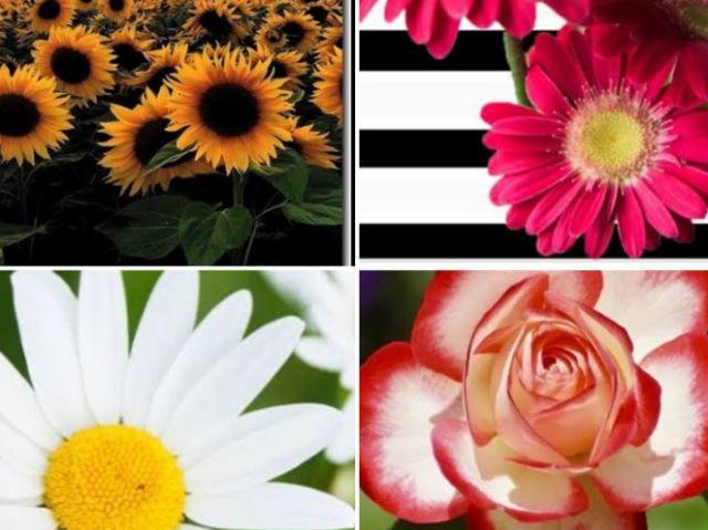 Que tipo flor você é?