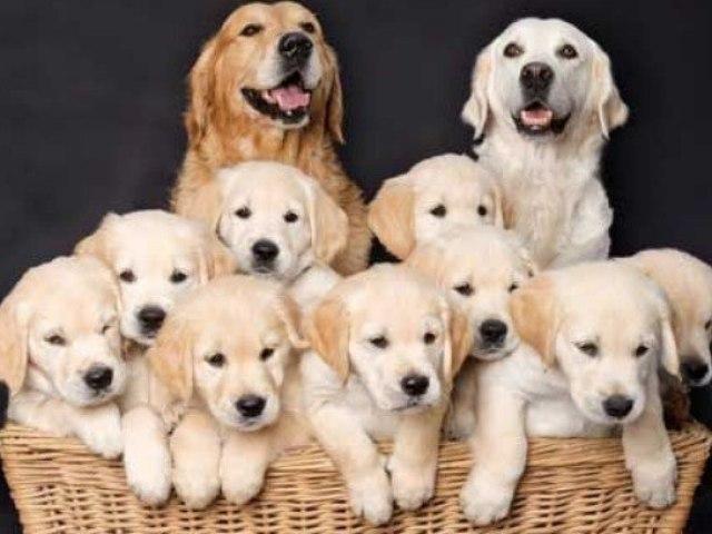 Que raça de cachorro mais combina com você?