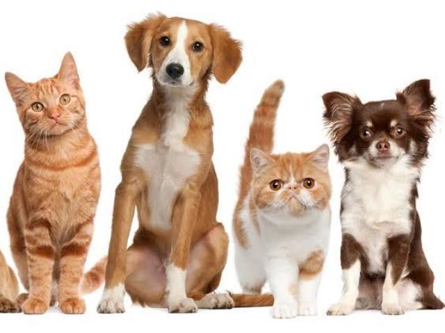 Qual animal doméstico combina mais com você?