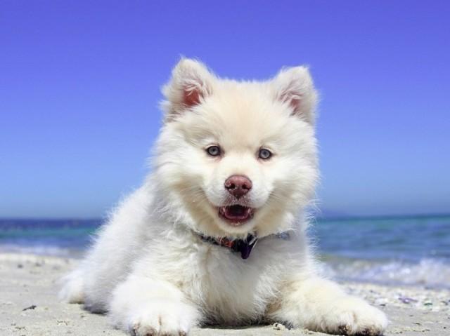 Que raça de cachorro você seria?