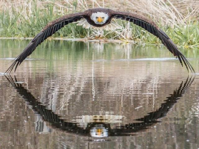 Você reconhece as aves?