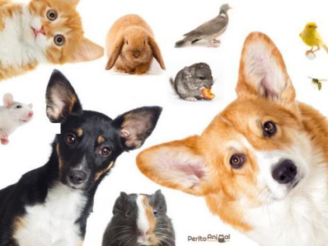 Qual animal exótico você deviria ter?