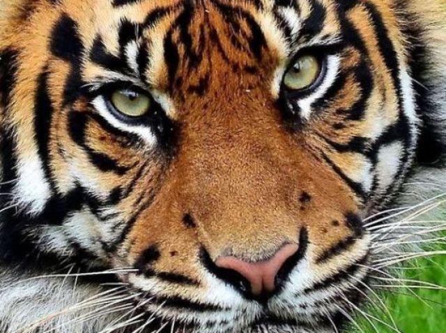Qual animal selvagem você seria ?