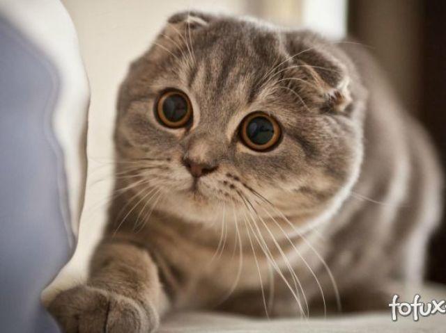 Qual raça de gato te define ?