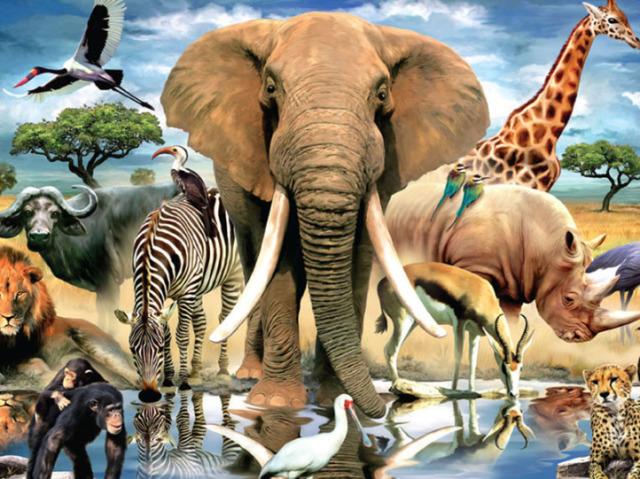 Qual animal você deveria ser?