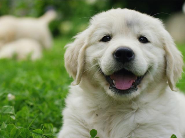 Você conhece a raça do cachorro pela foto?