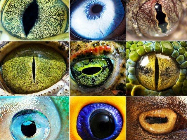 Teste de conhecimento: Veja se consegue identificar o animal só pelo olho