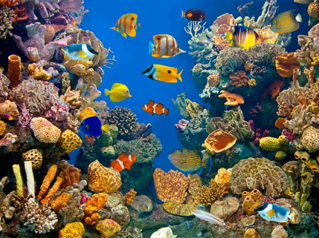 Você conhece mesmo animais marinhos?