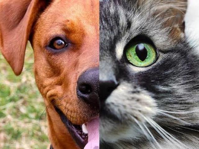 Esse animal é um Felino ou Canino?