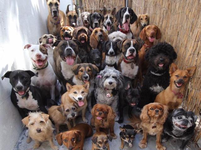 Que raça de cachorro 🐶 você se parece?