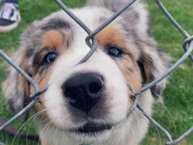 Qual raça de cachorro combina mais com você?