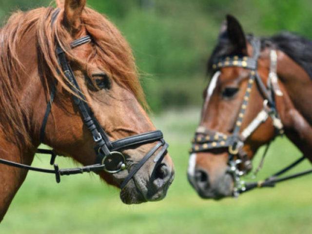 Você realmente conhece os cavalos?