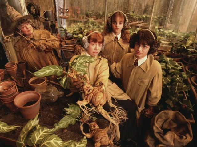 Harry Potter: Herbologia