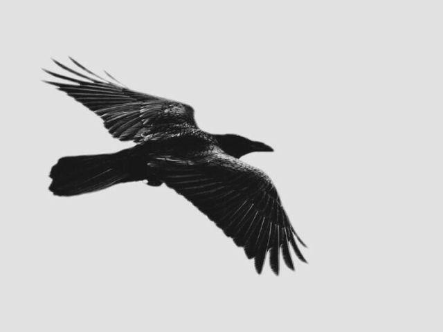 RPG - A invocadora de corvos [1]