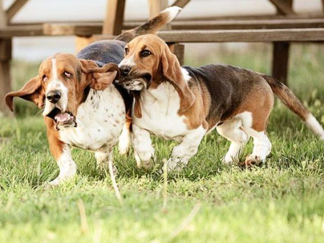 Qual raça de cachorro você é?