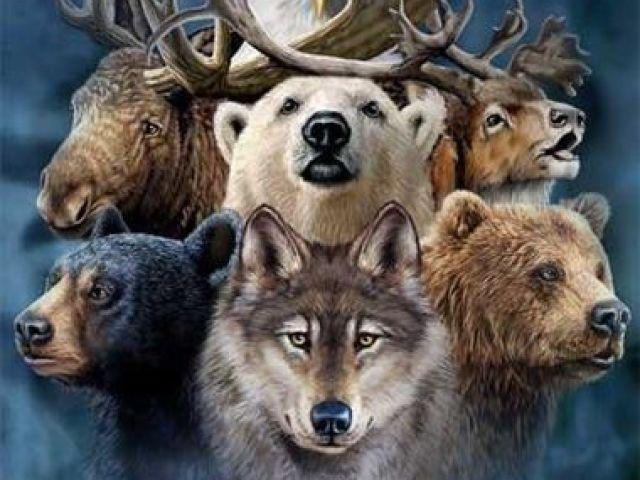 Descubra qual e o seu espirito animal?