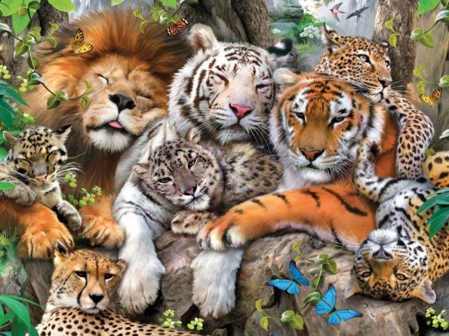 Qual animal você representa?