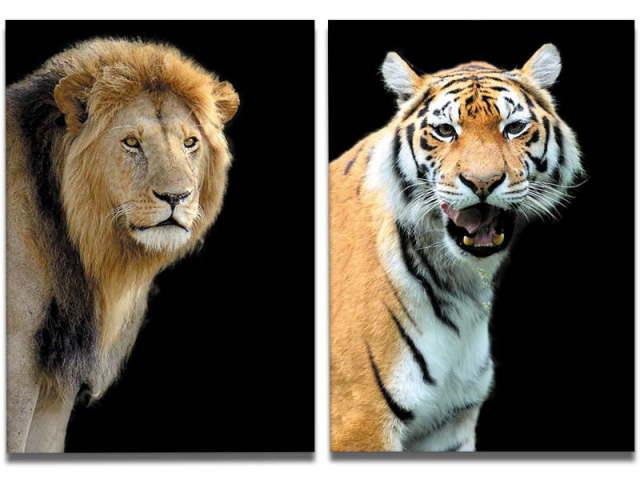 Você é mais leão ou tigre?