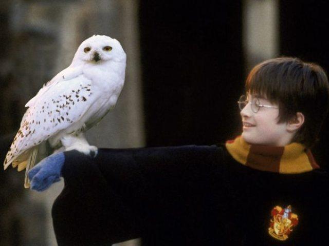 Quiz: Você sabe tudo sobre a Edwigges de Harry Potter ?