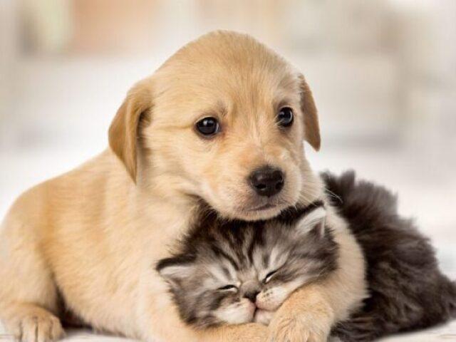 Gato ou cachorro?