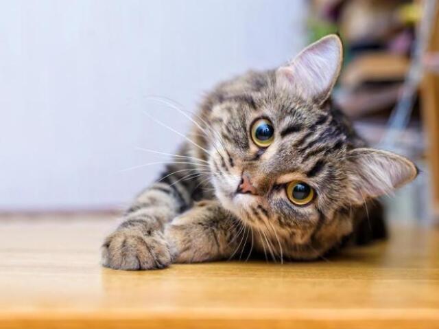Qual gato é perfeito pra você?