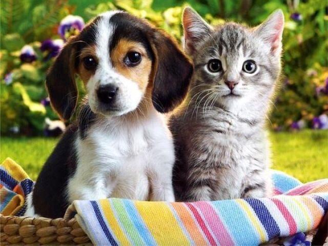 Você é Gato ou Cachorro?