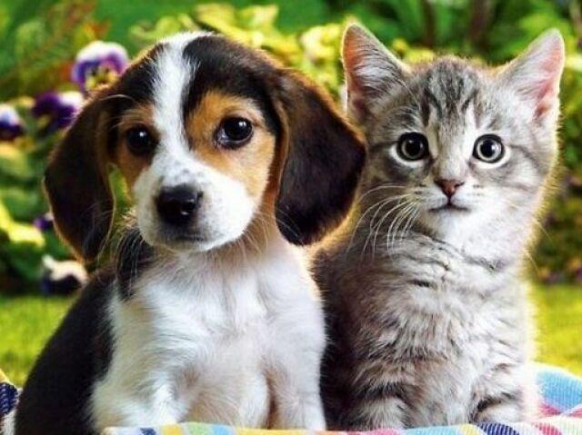 Você é responsável o suficiente para ter um animal de estimação?