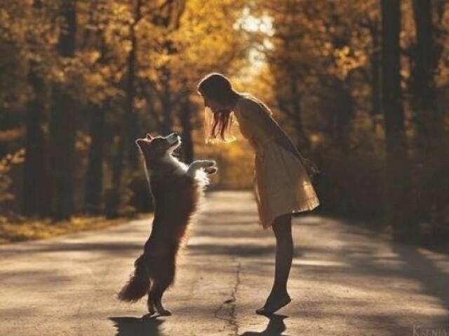 Escolha coisas para seu animalzinho e descubra qual cão você vai ganhar