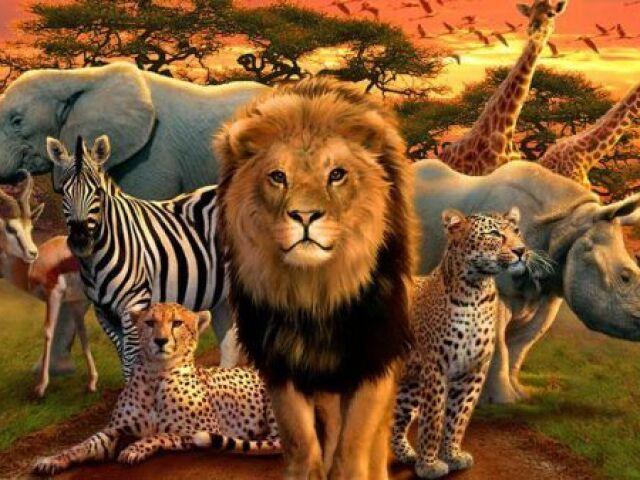 Qual animal selvagem você é?