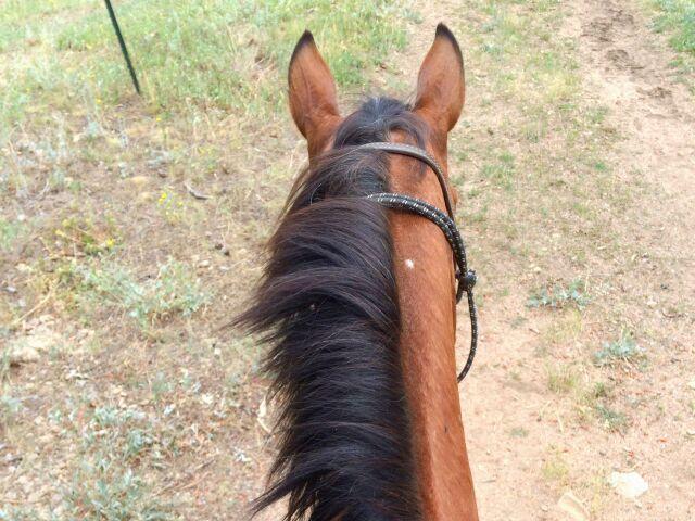 Sua vida com seu amigo cavalo/égua