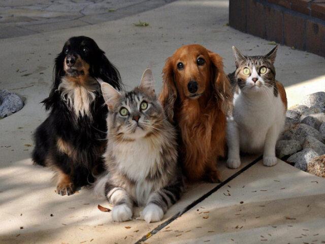 Você é mais cachorro ou gato?