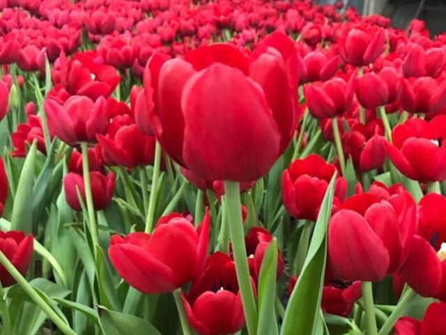 Especialidades de flores