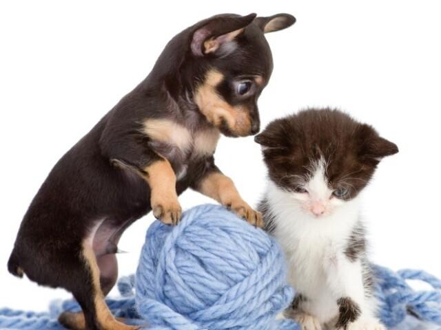 Que animal de estimação você teria?