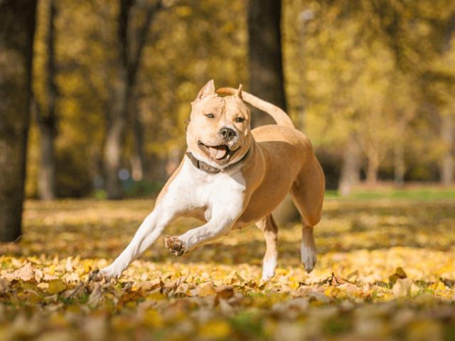 Qual seria o seu cachorro perfeito?