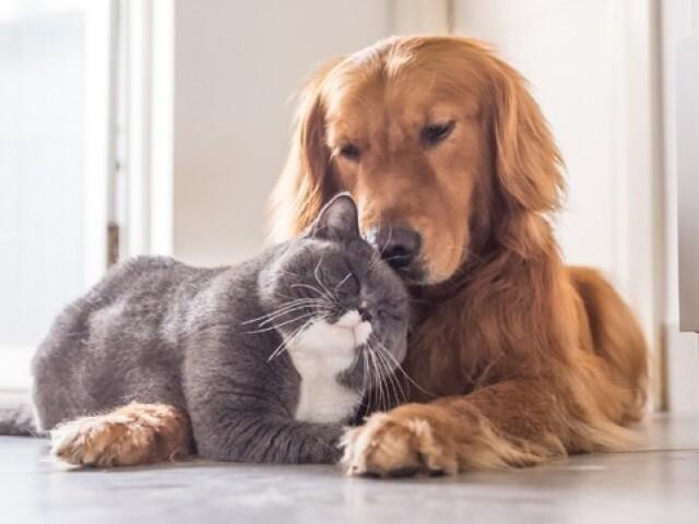 Você é um gato ou um cachorro?