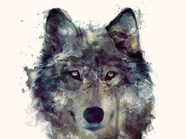 Qual lobo você seria?