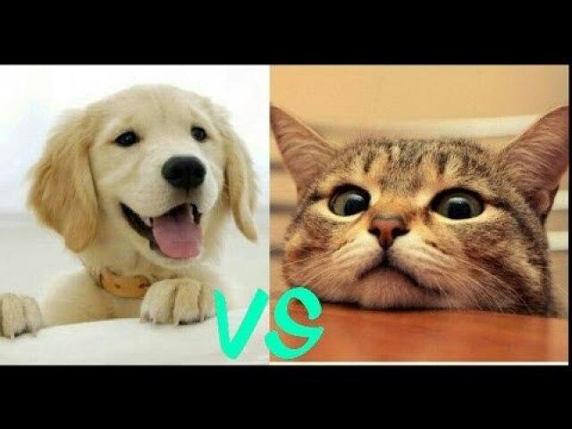 Você seria gato ou cachorro?