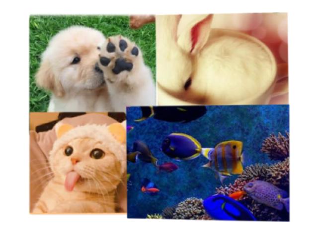 Qual destes animais domésticos você seria?