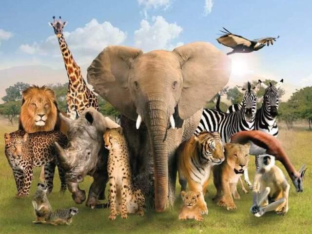 Qual animal selvagem você seria?