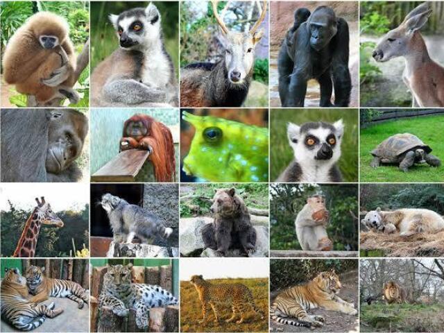 Qual animal você seria? 🦊🐶