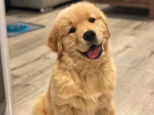 Que tipo de cachorro você seria?🐶🐕🦺