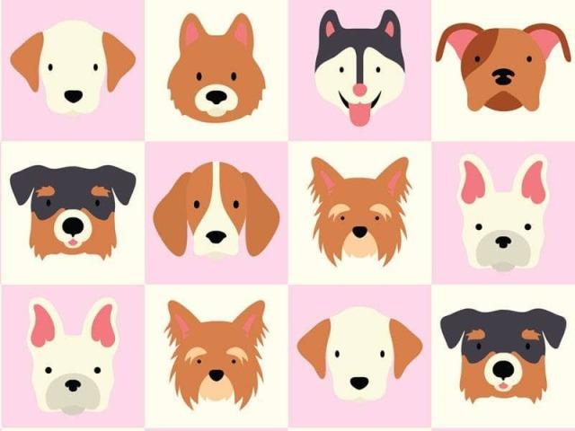 Acerte a raça de cachorro!