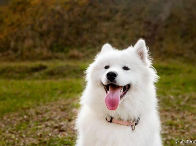 Que raça de cachorro você é?