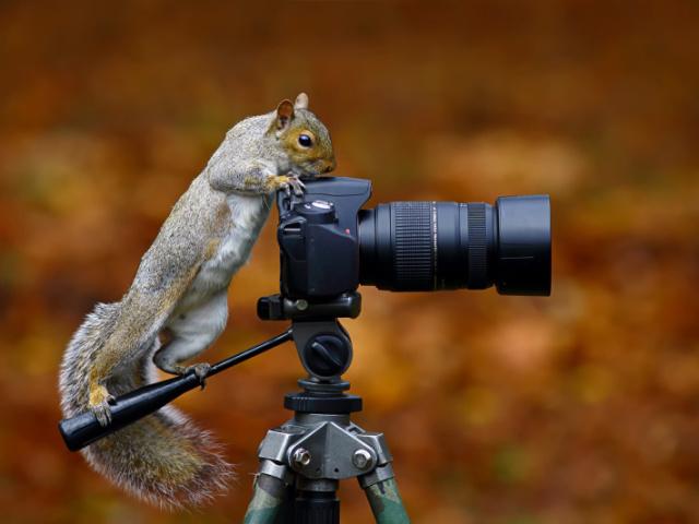 Qual tipo de fotógrafo você é?