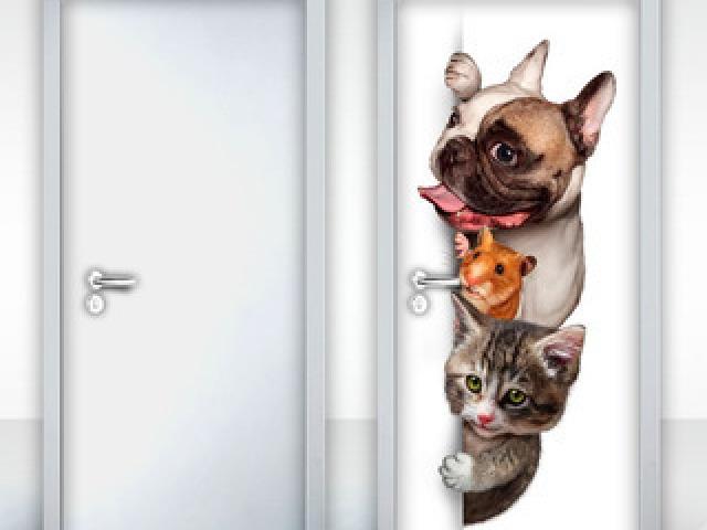 Vc é mais cachorro, gato, ou hamster?