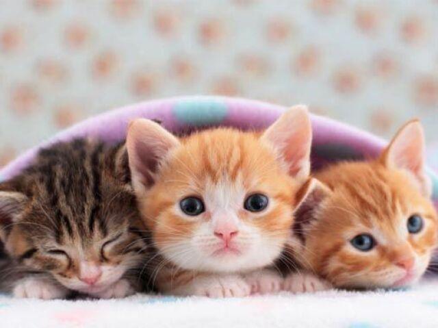 Qual gato você seria?