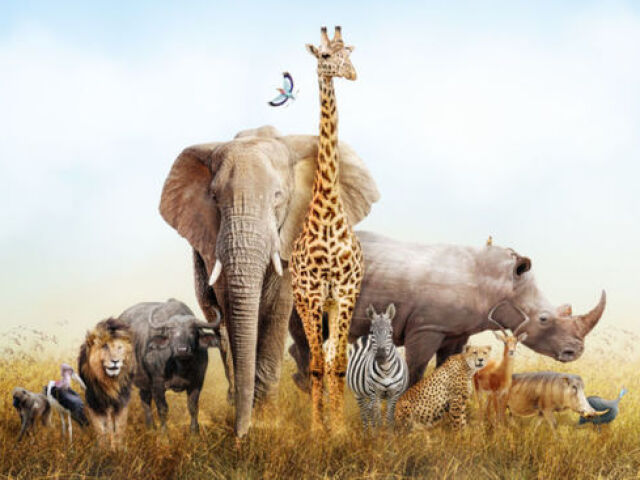 Qual animal vc seria ?