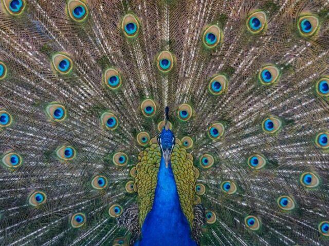 Que ave você seria?